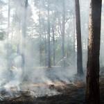 Löscharbeiten beim Waldbrand